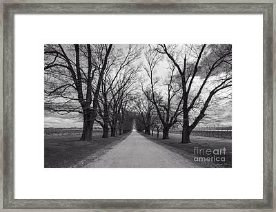 The Elm Trees Framed Print by Linda Lees