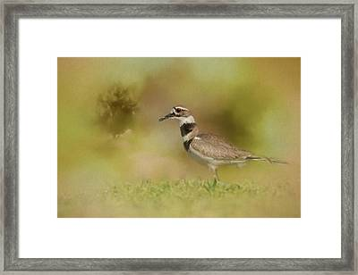 The Elusive Killdeer Framed Print