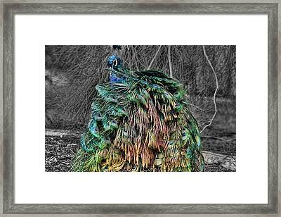 The Emperors Clothes Framed Print by Douglas Barnard