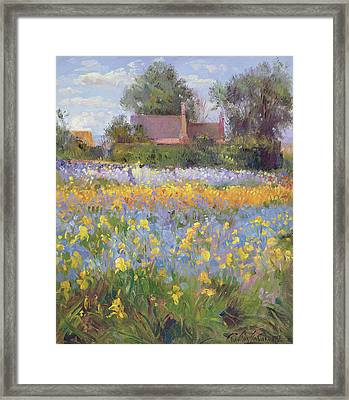 The Enclosed Cottages In The Iris Field Framed Print by Timothy Easton