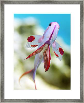 The Encounter Framed Print by Rico Besserdich