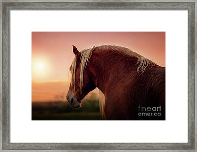 The End Of A Long Day At The Ranch Framed Print by Tamyra Ayles