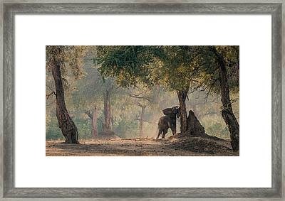 The End Of The Dry Season Framed Print by Giovanni Casini