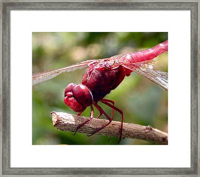 The End Of The Road Framed Print by Kathy Daxon