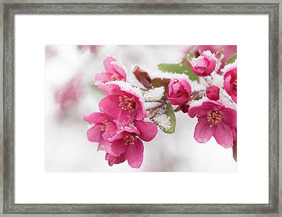 Framed Print featuring the photograph The End Of Winter by Ana V Ramirez