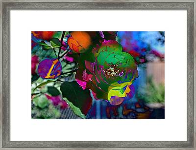 The English Rose In Color Framed Print by Thom Zehrfeld