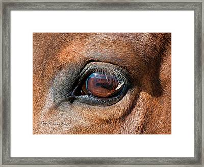The Equine Eye Framed Print