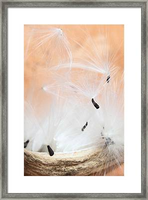 The Escape Framed Print by Paul Cowan