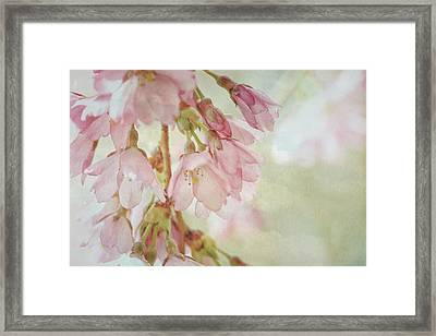 Framed Print featuring the photograph The Essence Of Springtime  by Connie Handscomb