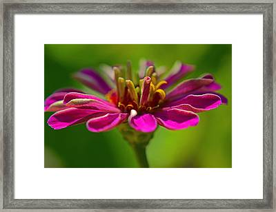 The Esteemed Flower Framed Print