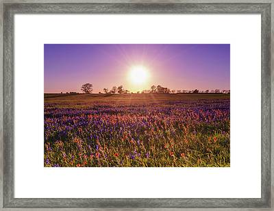 The Evening Sun Over A Wildflower Field Framed Print