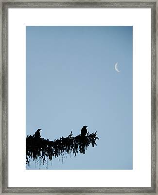 The Evergreen Framed Print by Gothicolors Donna Snyder