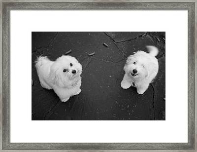 The Extrovert Framed Print by Colleen Williams