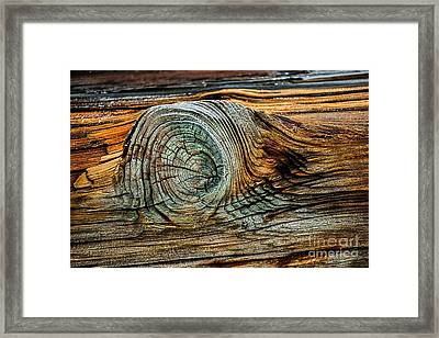 The Eye In The Wood Framed Print
