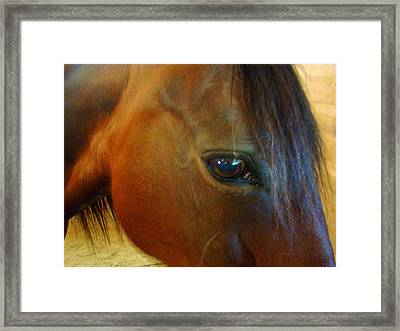 The Eye Of Beauty Framed Print