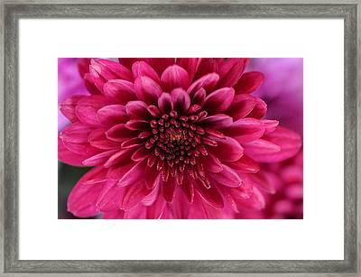 The Eye Of Pink Flower Framed Print