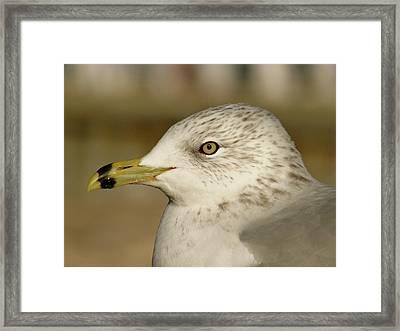 The Eye Of The Seagull Framed Print