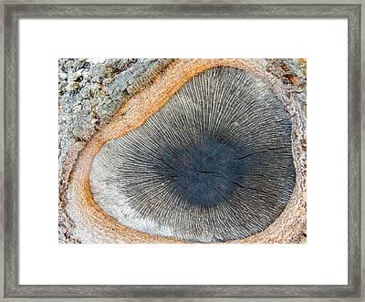 The Eye Of The Tree Framed Print