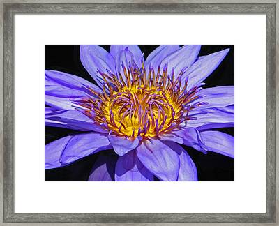 The Eye Of The Water Lily Framed Print