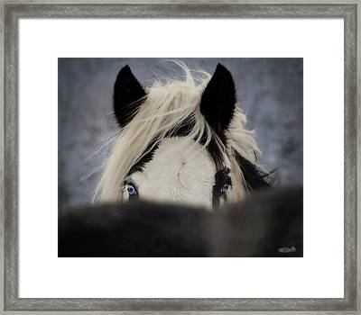 The Eyes Have It Framed Print by Elizabeth Sescilla