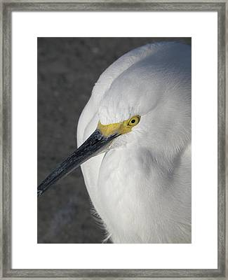 The Eyes Have It Framed Print by Rose  Hill