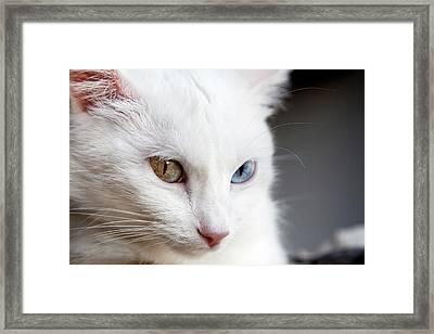 The Eyes Framed Print by Jorge Maia