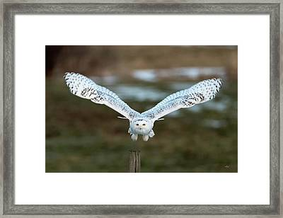 The Eyes Of Intent Framed Print by Everet Regal
