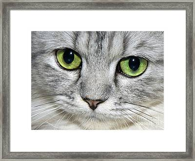 The Face Framed Print by  Graham Taylor
