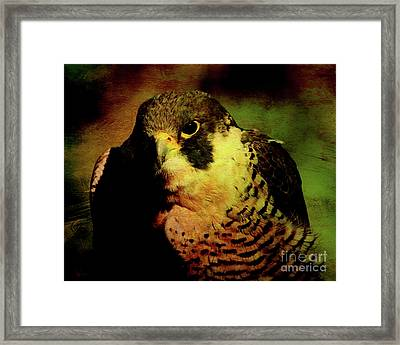 The Falcon Framed Print by Wingsdomain Art and Photography