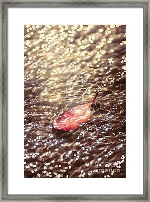 The Fall And The Light Merger Framed Print by Jorgo Photography - Wall Art Gallery