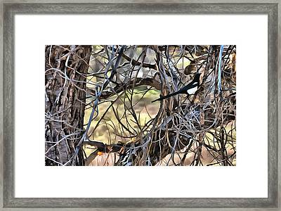 The Fall Magpie 1 Framed Print