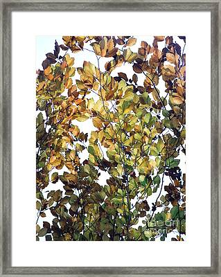 Framed Print featuring the photograph The Fall by Rebecca Harman