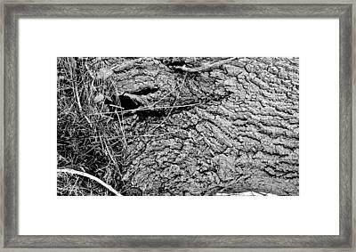 The Fallen - Dragon Eye Framed Print