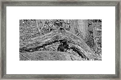 The Fallen - Dragon Framed Print