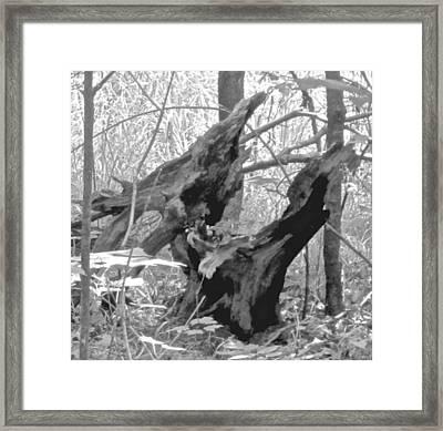 The Fallen - Dragon Skull Framed Print