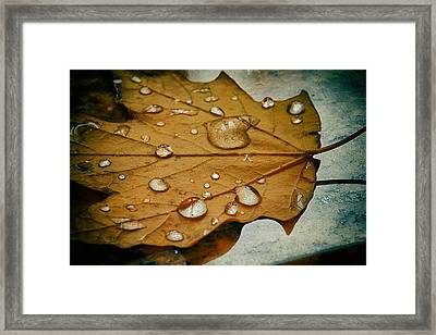 The Fallen Leaf Framed Print by Aleksander Rotner