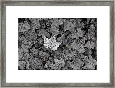 Framed Print featuring the photograph The Fallen by Mark Fuller