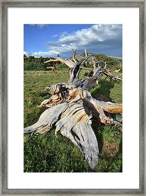 The Fallen One Framed Print by Ray Mathis