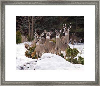 Framed Print featuring the photograph The Family by Angel Cher