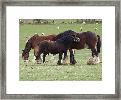 The Family Framed Print by Christopher Rowlands