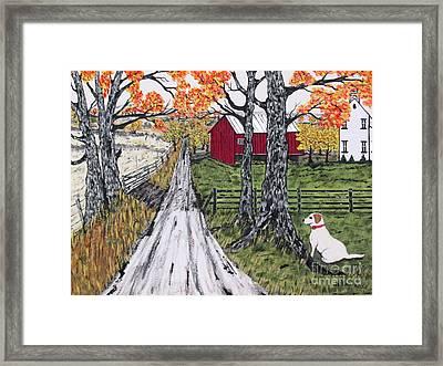 Sadie The Farm Dog Framed Print