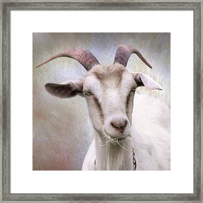 The Farmer's Billy Goat Framed Print