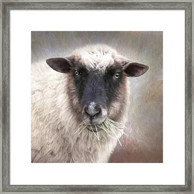 The Farmer's Sheep Framed Print by Lori Deiter