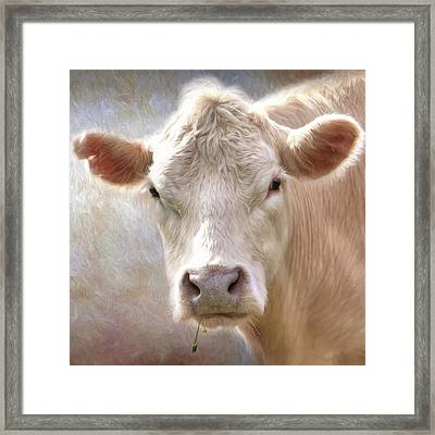 The Farmer's White Cow Framed Print
