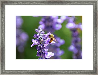 The Fauna And Flora Rendez-vous Framed Print