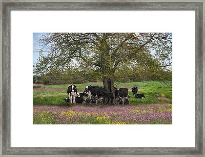 The Favorite Tree Framed Print by Robin-Lee Vieira