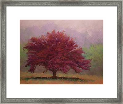The Feather Tree Framed Print by Paula Ann Ford