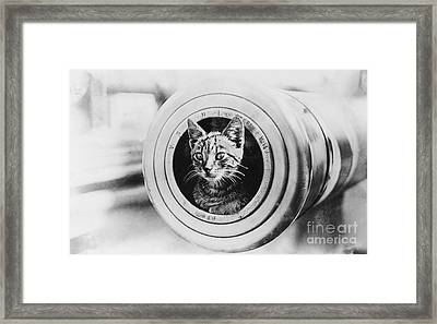 The Feline Mascot On Hmas Encounter During The First World War Framed Print by MotionAge Designs