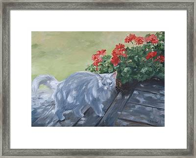 A Feral Cloud Framed Print