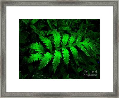 Framed Print featuring the photograph The Fern by Elfriede Fulda